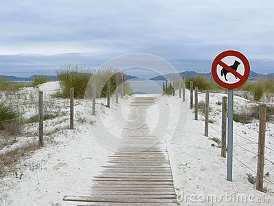 No dogs are allowed on the beach