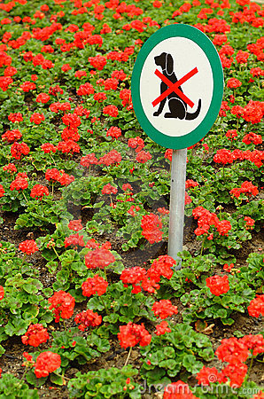 No dogs sign in flowerbed