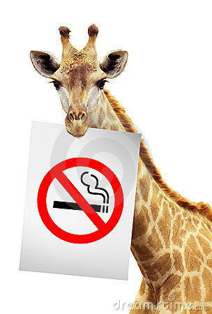 Free No Smoke White Paper On The Brink Of A Giraffe Stock Image - 21489731