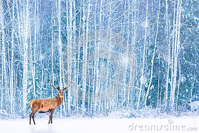 Noble deer against winter snowy forest. Artistic fairy Christmas. Winter seasonal image Stock Photo