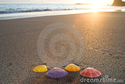 Noble scallop shell