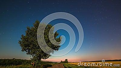 Noc na polu pszenicy zdjęcie wideo