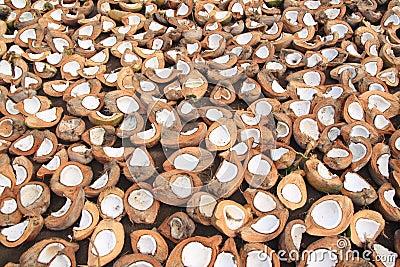 Noci di cocco che si asciugano sul sole in Indonesia