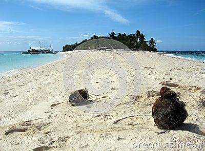 Noci di cocco sulla spiaggia