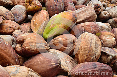 Noix de coco, avec la peau externe