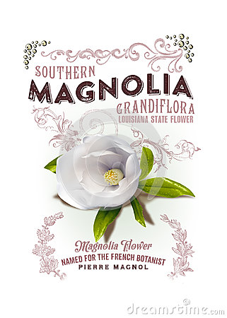 Free NOLA Collection Louisiana Magnolia Background Stock Images - 44301134