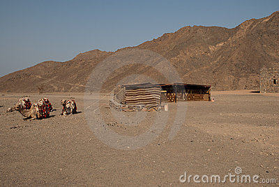 Nomad tent and camel in desert