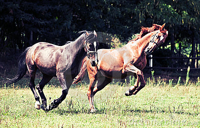 άλογα καλπασμού
