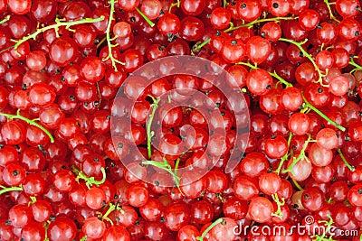 красный цвет смородины