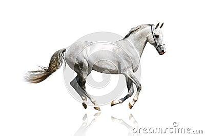 疾驰的银色公马白色