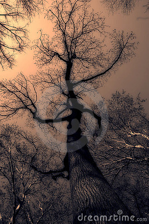神秘的结构树