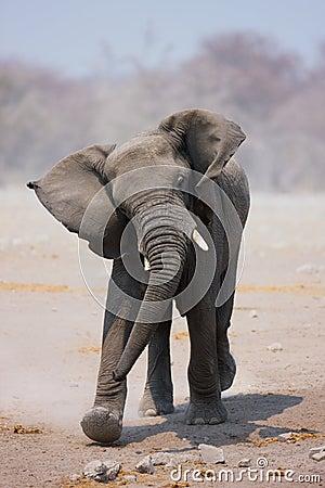 слон быка поручая