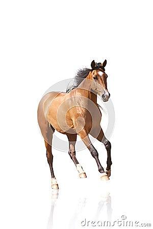 изолированная лошадь