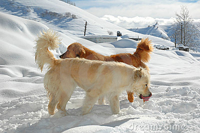 σκυλιά δύο
