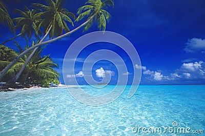 海滩热带的马尔代夫