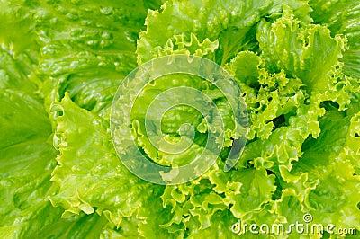 зеленый салат
