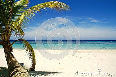 海滩热带的棕榈树