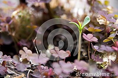 νέο φυτό