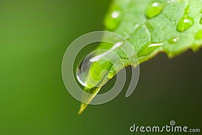下落叶子雨