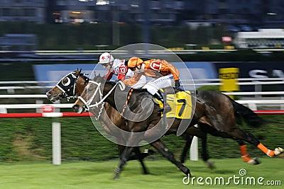 гонка лошади отделки Редакционное Изображение