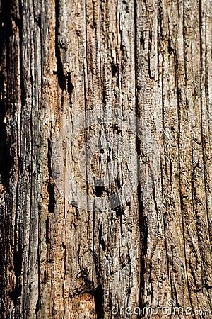 织地不很细木头