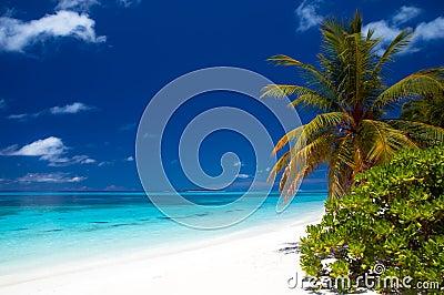 热带海滩的夏令时