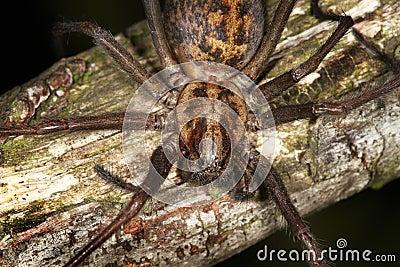 αράχνη σπιτιών ιστών αράχνης