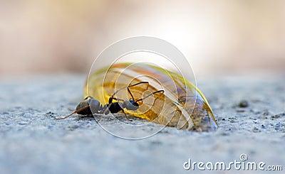 муравей есть мед