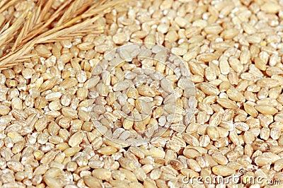 被去壳的大麦