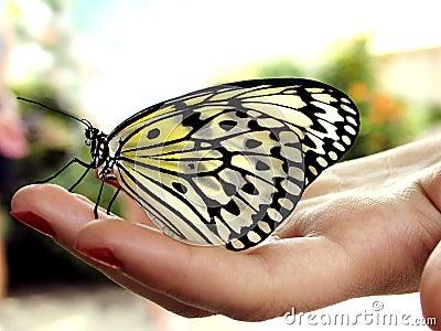 χέρι πεταλούδων