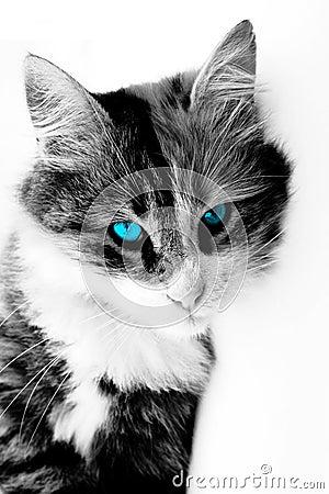 壁纸 动物 猫 猫咪 小猫 桌面 300_450 竖版 竖屏 手机