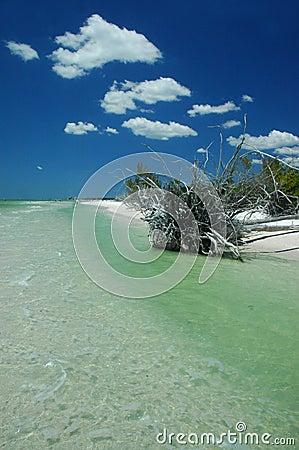 海滩风景的佛罗里达