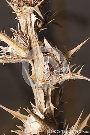 έντομο μικρό