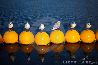 σειρά πουλιών