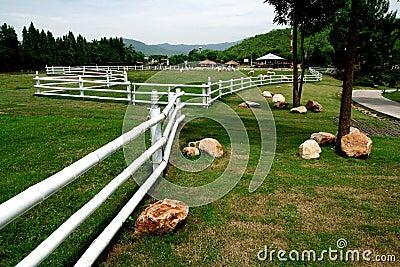 种田山绵羊