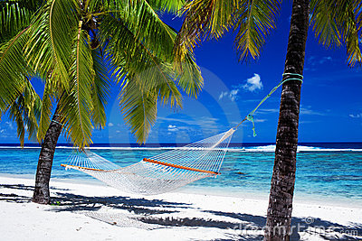 海滩吊床热带的棕榈树