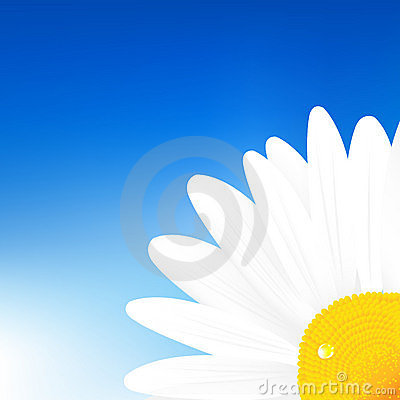 春黄菊天空