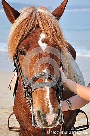 лошадь пляжа