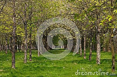 весна пущи