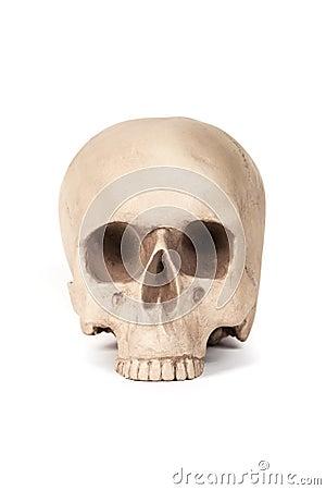 人力模型头骨