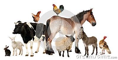 动物农场种类