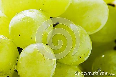 зеленый цвет виноградин плодоовощ