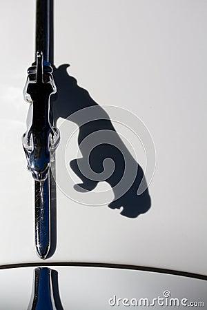 捷豹汽车的猫影子 图库摄影片