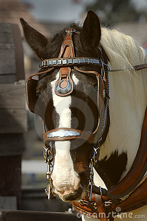 лошадь проекта