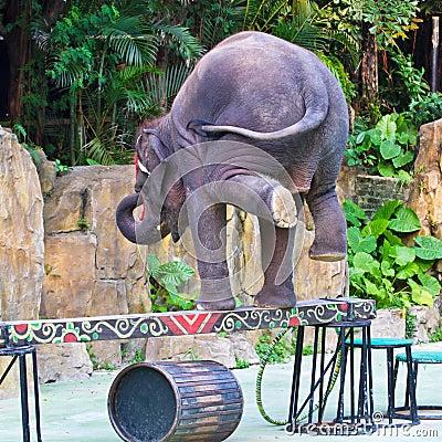 平衡木大象立场