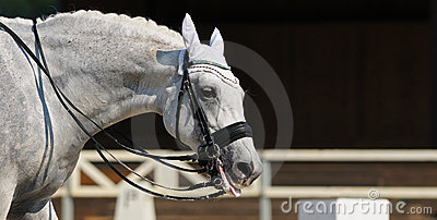 серая лошадь вне положила язык