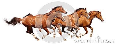 四疾驰栗色公马
