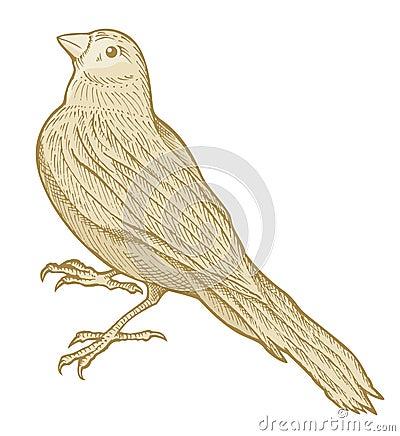 σκίτσο πουλιών