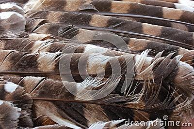 κουκουβάγια φτερών