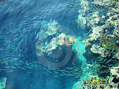 море фауны
